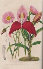 La Belgique Horticole, Journal des Jardins, des Serres et des Vergers