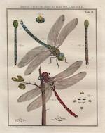 De Natuurlyke Historie der Insecten