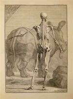 Tabulae sceleti et musculorum corporis humani & Tabulae ossium humanorum & Tabula vasis chyliferi explanatio & Tabulae VII uteri mulieris gravidae.