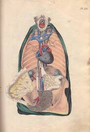 [Nouveau manuel d'anatomie descriptive et raisonné à l'usage des gens du monde] - [Constant Crommelinck]