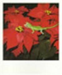 Nobuyoshi Araki polaeroid - Nobuyoshi Araki (ISBN 9783896110381)
